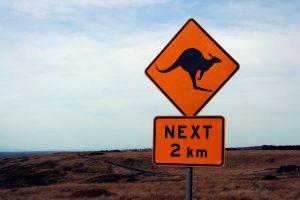 Wie ein geschlagenes Känguru die Arbeitsweisen unserer Medien aufzeigt